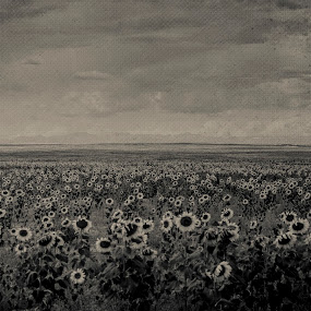 Colorado Sunflower by Geoff Ridenour - Landscapes Prairies, Meadows & Fields ( colorado, sunflower, landscape )