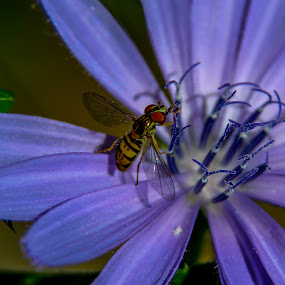 by Forrest Covin - Animals Insects & Spiders