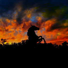 Rearing Up by Vince Scaglione - Animals Horses ( clouds, sunset, horse, animal )