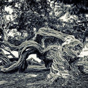 On All Fours by Chris Mare - Nature Up Close Trees & Bushes ( b&w, park, tree, black and white, crawling tree )