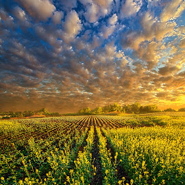 The Possibilities Are Many by Phil Koch - Landscapes Prairies, Meadows & Fields ( vertical, travel, yellow, love, sky, nature, weather, light, orange, trending, colors, twilight, art, mood, journey, horizon, rural, portrait, country, dawn, environment, season, serene, popular, outdoors, lines, natural, hope, inspirational, canon, wisconsin, ray, joy, landscape, spring, sun, photography, life, emotions, dramatic, horizons, inspired, clouds, office, purple, park, heaven, camera, beautiful, scenic, living, morning, field, unity, blue, sunset, amber, peace, meadow, beam, sunrise, earth )