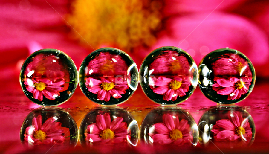 by Dipali S - Abstract Macro ( balls, reflection, macro, pink, flower )