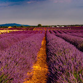 Purple Passion  by Stanley P. - Landscapes Prairies, Meadows & Fields