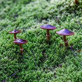 waiatapu fungi by Sheena True - Nature Up Close Mushrooms & Fungi ( www.simplytrueimages.com )
