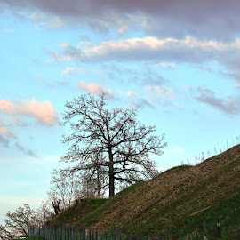 Lone Tree by Beth Bowman - Landscapes Travel