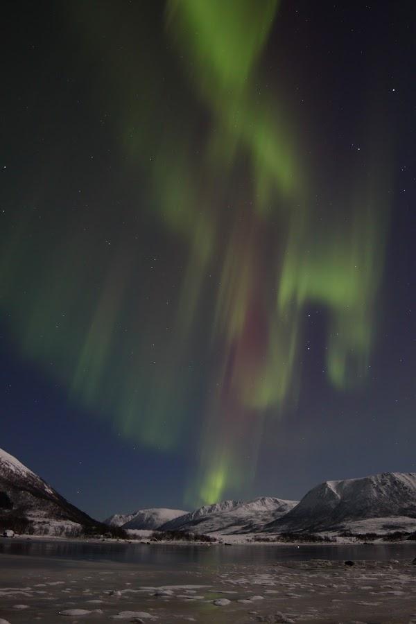 aurora buksnesfjord by Benny Høynes - Landscapes Starscapes ( nature, ice, buksnesfjorden, aurora, andøy )