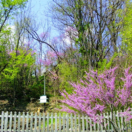 Spring has Sprung in Galena by Kathy Rose Willis - Nature Up Close Trees & Bushes ( fence, galena, illinois, green, trees, pink, spring,  )