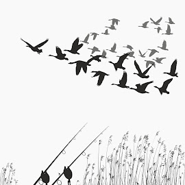 Geese - winged migration by Vladimir Ceresnak - Drawing All Drawing ( cutout, animals, figure, fly, background, feather flock, birds, drawing, black )