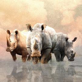 The Sentinels by Bjørn Borge-Lunde - Digital Art Animals ( wild animal, wilderness, animals, nature, wildlife, africa, rhino )