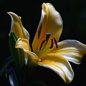 Daylily by William Lallemand - Nature Up Close Flowers - 2011-2013