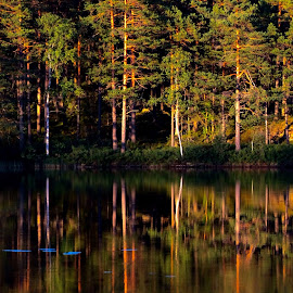 Reflections3 by Alf Winnaess - Landscapes Forests
