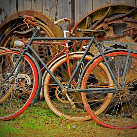 Best Days Have Gone by Marco Bertamé - Transportation Bicycles (  )