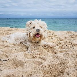 by Hoomanz Xandi - Animals - Dogs Portraits