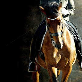 Ricco by Bjørn Borge-Lunde - Digital Art Animals ( rider, horses, riding, horse, equestrian, competition, animal )
