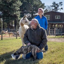 Family Portrait by Lisa Cozene - People Family ( farm, barn, family, puppy, llama )