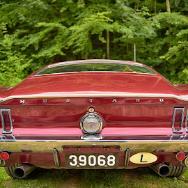 Red Beast ! by Marco Bertamé - Transportation Automobiles ( car, vintage, letter, green, chrome, rear, us, number, l, luxembourg, 3, mustang, number plate, 0, red, backlight, 6, american, gt, 9, oldtimer, bumper, 8, ford )