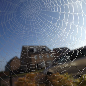 A Work of Art by Charlotte Swann - Nature Up Close Webs