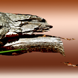 alligatorlog by Edward Gold - Digital Art Things ( hunting fish.rust backgrown, shaped log, rust color water, alligatorshaped, bright color,  )