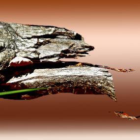 alligatorlog by Edward Gold - Digital Art Things ( hunting fish.rust backgrown, shaped log, rust color water, alligatorshaped, bright color )