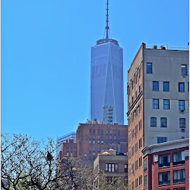 Freedom Tower by Denny Paul - Buildings & Architecture Architectural Detail ( lower manhattan, color, manhattan, new york, freedom tower )