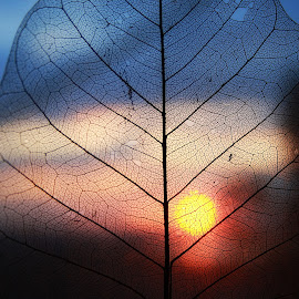 Time by Svetlana Micic - Nature Up Close Other plants ( sky, sunset, nature up close, leaf, sun )