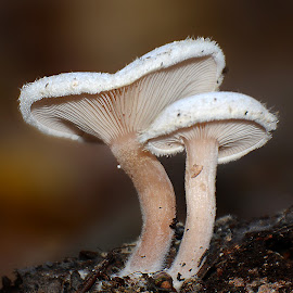 by Manuela Dedić - Nature Up Close Mushrooms & Fungi
