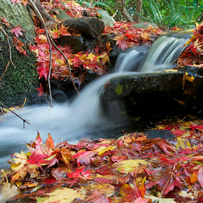 Water flowing in a small stream by Keith Sutherland - Nature Up Close Water ( stream water fall leaves flowing red yellow,  )