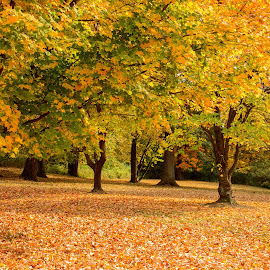 Here comes the Autumn by Majid Uppal - Nature Up Close Trees & Bushes