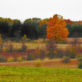 Pasturized by Kathy Woods Booth - Landscapes Prairies, Meadows & Fields ( autumn leaves, autumn, meadow, meadows, fields )