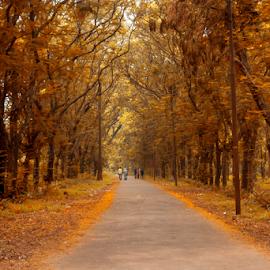 Autumn Park by Topu Saha - City,  Street & Park  City Parks ( dhaka, botanical, city, street, botanical garden, tree, topu saha, garden, autumn, bangladesh, trees, park,  )