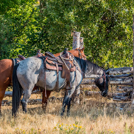 by Erin Schwartzkopf - Animals Horses ( ranch, cowboy, ranching, horses, wyoming, horse, western,  )