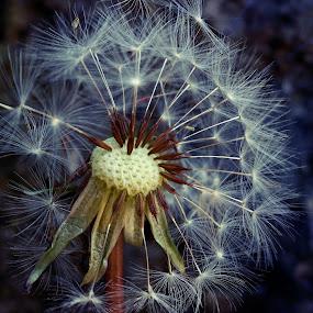 by Ksenija Glavak - Nature Up Close Other plants (  )