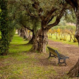 by Vladimir Nagalin - City,  Street & Park  City Parks ( park, color, landscape, italy, olives )