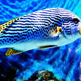 Sea World Sentosa Singapore by Suresh K Srivastava - Animals Fish ( sea life, fish, aquarium, natural pattern, beauty in nature, sea world )