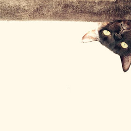 Jettmycat by Wennie Liu - Animals - Cats Playing ( #jettmycat )