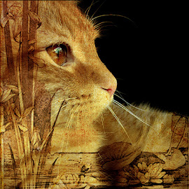 by Trish Hamme - Digital Art Animals