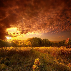 Gone Far Away Into The Silent Land by Phil Koch - Landscapes Sunsets & Sunrises ( field, sky, twilight, art, meadow, horizon, horizons, landscape, light, sun,  )