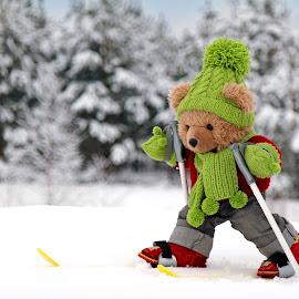 Teddy skiing by Gundega O - Artistic Objects Toys ( toys skiing, winter, toy, teddy bear, snow, winter sports, teddy )