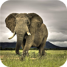 African animals LiveWallpapers