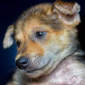 by SweeMing YOUNG - Animals - Dogs Portraits