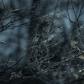 Designed by Brianne Toma - Nature Up Close Webs ( idaho, up close, coeur d'alene, details, nature, north idaho, tubbs hill, moody, nature close up, web, nikon, spider web )
