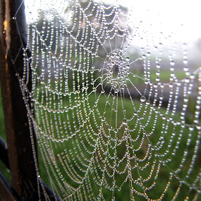by Albina Jasinskaite - Nature Up Close Webs