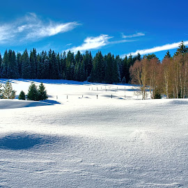 Picture by Vladimir Gergel - Landscapes Forests