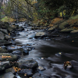 Down Stream by Don Malcolm - Landscapes Waterscapes