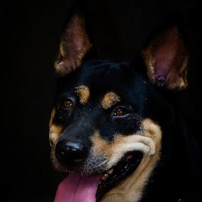 Black Dog by Pandu Sinatriyo - Novices Only Pets ( pet, dog, close up, black, friend, animal )