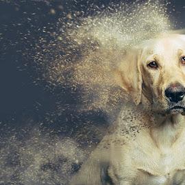Sand dog by Ziga KolSek - Animals - Dogs Portraits ( studio, sand, sandstorm, labrador, dog, portrait )