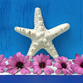 A starfish with flowers still life. by Dipali S - Artistic Objects Other Objects ( purple, still life, starfish, artistic, blue background, daisy, beauty, flower )