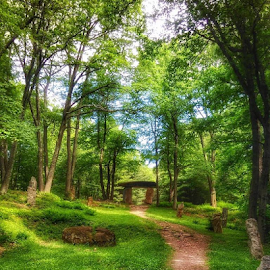 by Lisa Newberry - City,  Street & Park  City Parks ( green, nature, trees, park, peaceful )