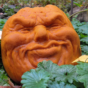 Pumpkin Face by John Ogden - Public Holidays Halloween ( scary, orange, pumpkin, decorations, halloween )