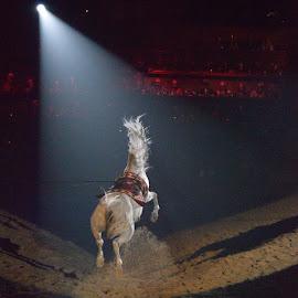 by Ana Lydia Ochoa-Monaco - Animals Horses